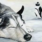 Siberian Huskey Art Print