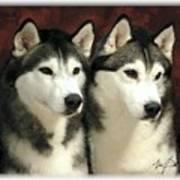 Siberian Huskies Related Art Print