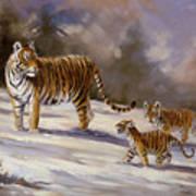 Siberian Tiger Family Art Print
