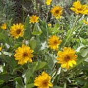 Sierra Wildflowers Art Print