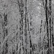 Silence Of Winter Art Print