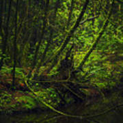 Silent Forest Art Print by Stuart Deacon