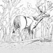 Silent Forrest Art Print