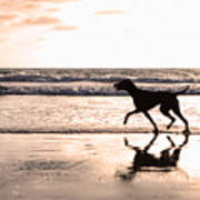 Silhouette Of Dog On Beach At Sunset Art Print by Susan Schmitz
