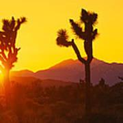 Silhouette Of Joshua Trees Yucca Art Print