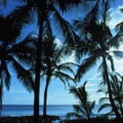 Silhouette Of Palms Art Print
