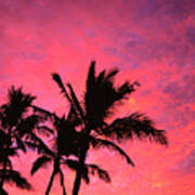 Silhouetted Palms Art Print