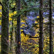 Silver Falls State Park Oregon 2 Art Print