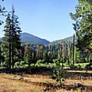 Simpson Meadow - Sierra Art Print
