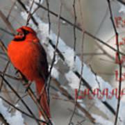Singing Cardinal Christmas Card Art Print