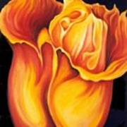 Singing Tulip Art Print