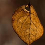 Single Fall Leaf Art Print