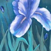 Single Iris With Buds Art Print