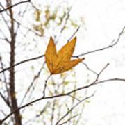 Single Leaf In Fall Art Print