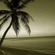 Single Palm At The Beach Art Print