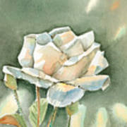 Single  White Rose Art Print