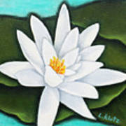 Single White Water Lily Art Print