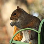 Sitting Squirrel Art Print