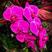 Six Flowers Art Print