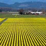 Skagit Valley In Springtime Art Print