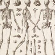 Skeletons Art Print
