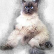 Sketch Of Regal Himalayan Cat - Not Art Print