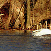 Skimming The Water Art Print