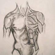 Skin And Muscle Art Print