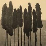 Skinny Trees In Sepia Art Print by Marsha Heiken
