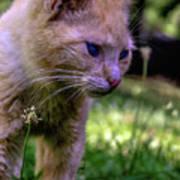 Skippy Feral Cat Portrait 0369b Art Print