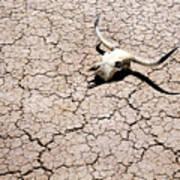 Skull In Desert 2 Art Print