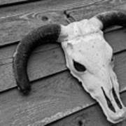 Skull In North Dakota  Art Print