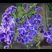 Sky Flower Window  Art Print