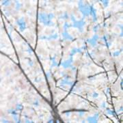 Sky Full Of Blossoms Art Print
