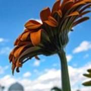 Flower Skyscraper Art Print