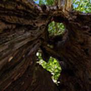 Sky View Through A Hollow Tree Trunk Art Print