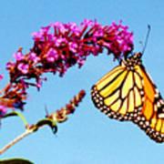 Skylands Monarch Art Print