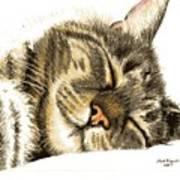 Sleeping Tabby Cat  Art Print