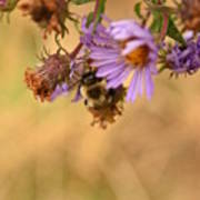 Sleepy Bee On New England Aster Vertical Art Print