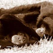 Sleepy Monkeys Art Print