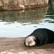 Sleepy Sea Otter Art Print
