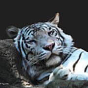 Sleepy Tigress Art Print