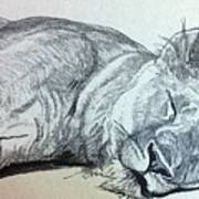 Slepping Lion Art Print
