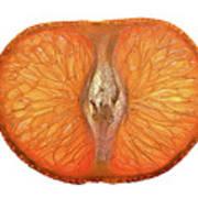 Slice Of A Mandarin Orange Art Print
