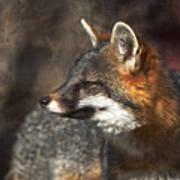 Sly As A Fox Art Print