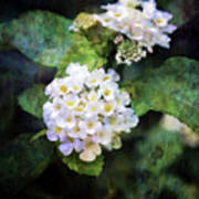 Small Blossoms 4948 Idp_2 Art Print