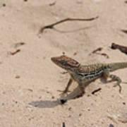 Small Brown Lizard Sitting On A White Sand Beach Art Print
