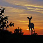 Small Buck Against Sunset Art Print by Ron Kruger