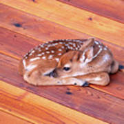 Small Deer Fawn Resting On Cedar Wood Deck Art Print