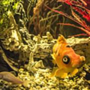 Small Fish In An Aquarium Art Print